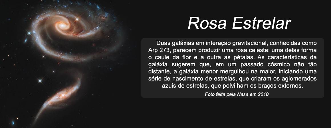 Rosa-Estrela-Hayah